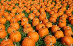 Background of pumpkins Royalty Free Stock Photo