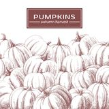 Background with pumpkins in brownish white tones Stock Photo