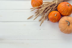 Background with pumpkins and ears of wheat on a white wooden boa Stock Photo
