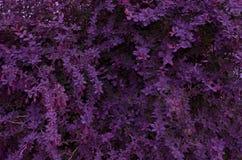 Background of purple bright stock photos