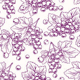 Background with purple currant Royalty Free Stock Images