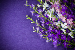 Background with purple flowers Royalty Free Stock Photography