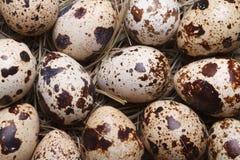 Background quail eggs in hay closeup. macro. Stock Photo