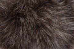 Background of raccoon fur Stock Photos