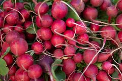Background of Radishes Close-Up. With roots from Organic farmers Royalty Free Stock Photography