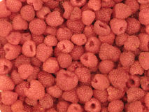 Background of raspberries. Background full of delicious raspberries Stock Photos