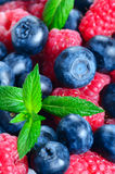 Background of raspberries and blueberries. Background of raspberry and blueberry with a sprig of mint Royalty Free Stock Photography