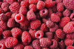 Background of raspberries. Fresh raspberries closeup. Top view. Background of red berries. Various fresh summer fruits. Red raspberries Royalty Free Stock Images