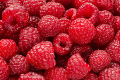 Background from raspberry berries. Background from ripe berries of raspberry Royalty Free Stock Photography