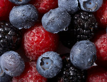 Background from Raspberry and blueberry. Background from fresh Raspberry and blueberry berry Stock Image