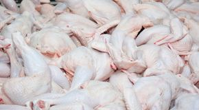 Raw carcasses of chickens. The background from the raw carcasses of chickens royalty free stock photography