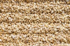 Background of raw dry grains of pearl barley decomposed by furrows royalty free stock photography