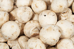 Background with raw mushrooms Royalty Free Stock Image