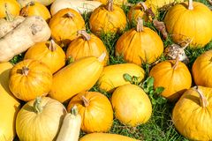 Raw pumpkins background Royalty Free Stock Images