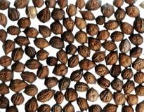 Walnut. Background with the raw walnuts stock photos