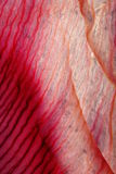 background red Στοκ Φωτογραφίες