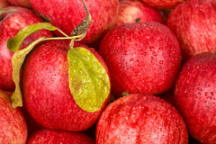 Background of red apples Stock Photography