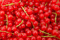Background of red berries Royalty Free Stock Photography