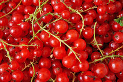 Background of red berries Stock Photos