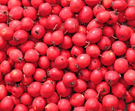 Background of red berries of hawthorn Stock Photo