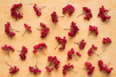 Background with red berries of viburnum Stock Photos