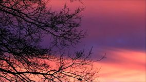 Background red blue sky. Branches in winter against red clouds, landscape stock footage