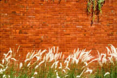 Background of red brick wall with Cogon grass and Ant Plant infr Royalty Free Stock Image