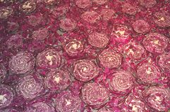 Background of red cabbage vegetables Stock Photography