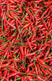 Background of red chillies Stock Photography