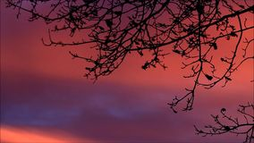 Background red clouds. With branches stock footage