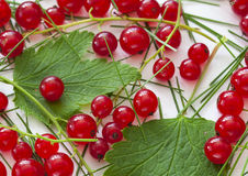 Background with Red Currant. Stock Image