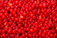 Background of red currants Royalty Free Stock Image
