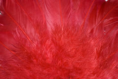 Background from red feathers Royalty Free Stock Photography