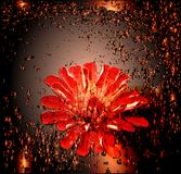 Background with red flower. Royalty Free Stock Images