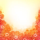 background with red flowers Royalty Free Stock Photography