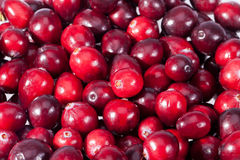 Background of red fresh raw cranberry fruits  macro Stock Photos