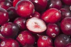 Background of red fresh raw cranberry fruits  macro Stock Photo