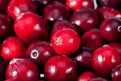 Background of red fresh raw fruits of cranberries macro Stock Photography