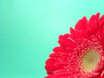 Background Red Gerbera. High resolution digital photo of a close-up red gerbera daisy with open space or background royalty free stock photos