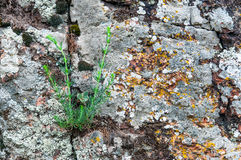 Background of red granite moss and grass Stock Photo
