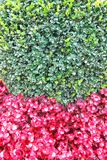 Background of red and green plants Stock Photo