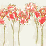 Background with red iris flowers. Vector romantic floral background with red iris Stock Photos