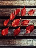 Red Leaves. Background with red leaves on a wooden board royalty free stock photos