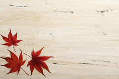 Background with red leaves Stock Image