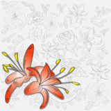 Background with red lily flowers Royalty Free Stock Images