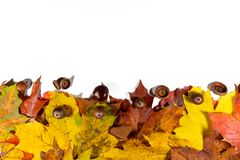 Background with red, orange, brown and yellow falling autumn leaves, chestnuts and peanuts on white board.  Royalty Free Stock Photo