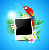 Background with red parrot and photo Royalty Free Stock Photo