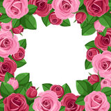 Background with red and pink roses. Royalty Free Stock Photo