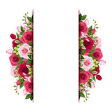 Background with red and pink roses and freesia flo. Vector vertical background with red and pink roses and freesia flowers and green leaves Royalty Free Stock Photo