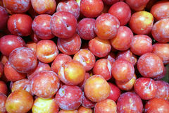 Background of red plum Stock Photos